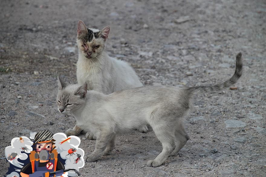 شركة مكافحة القطط بالرياض